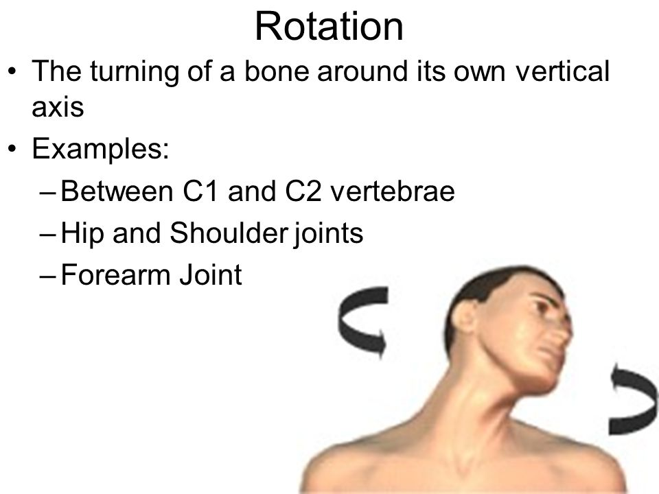 Rotation The turning of a bone around its own vertical axis Examples: –Between C1 and C2 vertebrae –Hip and Shoulder joints –Forearm Joint
