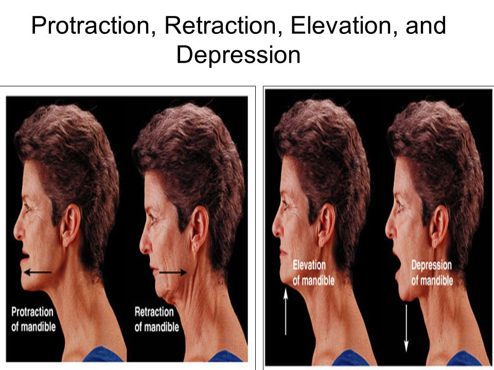 Protraction, Retraction, Elevation, and Depression
