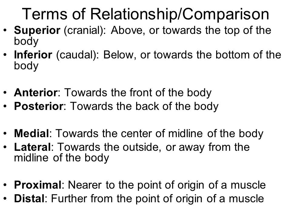 Terms of Relationship/Comparison Superior (cranial): Above, or towards the top of the body Inferior (caudal): Below, or towards the bottom of the body