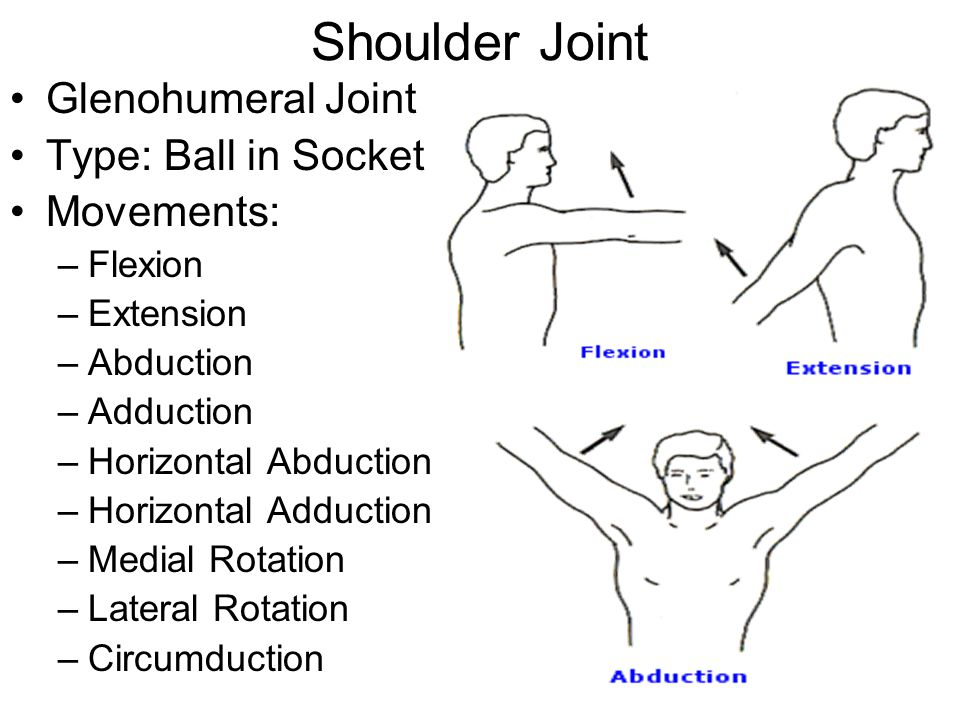 Anatomical Terms of Movement YouTube 1637550 - archeryinfo.info