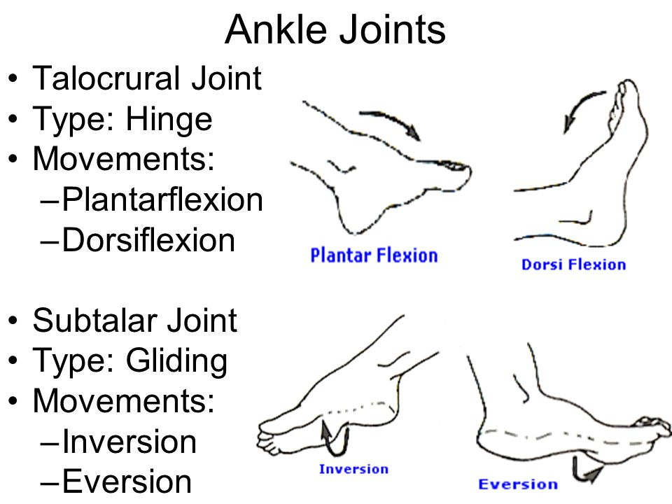 Ankle Joints Talocrural Joint Type: Hinge Movements: –Plantarflexion –Dorsiflexion Subtalar Joint Type: Gliding Movements: –Inversion –Eversion