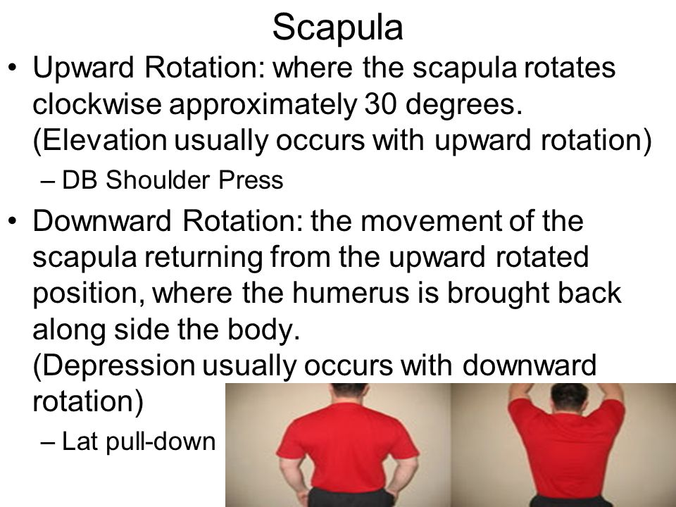 Scapula Upward Rotation: where the scapula rotates clockwise approximately 30 degrees. (Elevation usually occurs with upward rotation) –DB Shoulder Pr