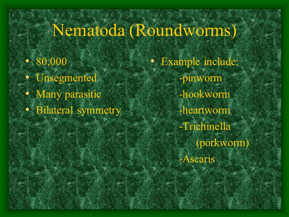Nematoda (Roundworms) 80,000 Unsegmented Many parasitic Bilateral symmetry Example include: -pinworm -hookworm -heartworm -Trichinella (porkworm) -Ascaris