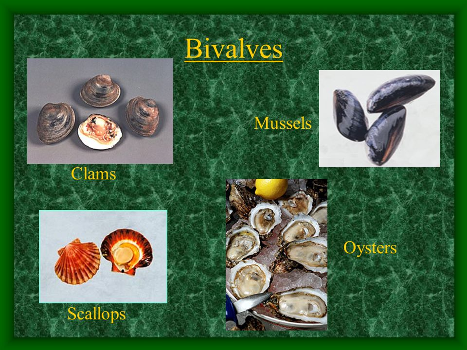 Bivalves Clams Mussels Oysters Scallops