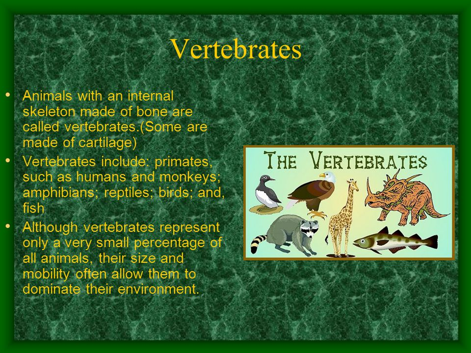 Vertebrates Animals with an internal skeleton made of bone are called vertebrates.(Some are made of cartilage) Vertebrates include: primates, such as humans and monkeys; amphibians; reptiles; birds; and, fish Although vertebrates represent only a very small percentage of all animals, their size and mobility often allow them to dominate their environment.