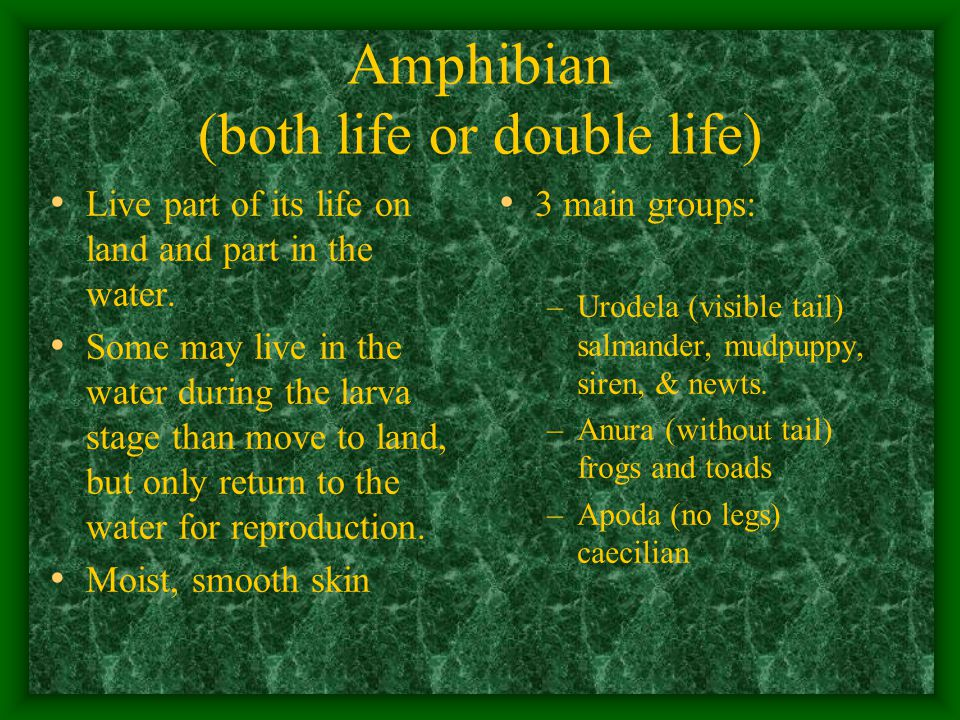 Amphibian (both life or double life) Live part of its life on land and part in the water.