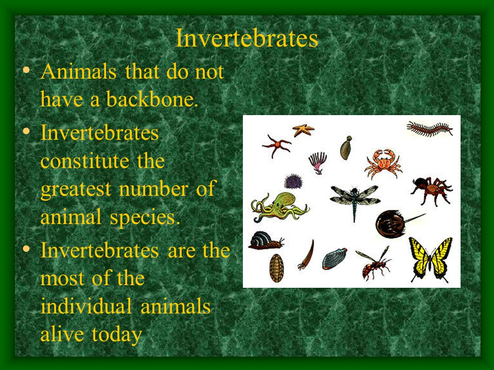 Invertebrates Animals that do not have a backbone.