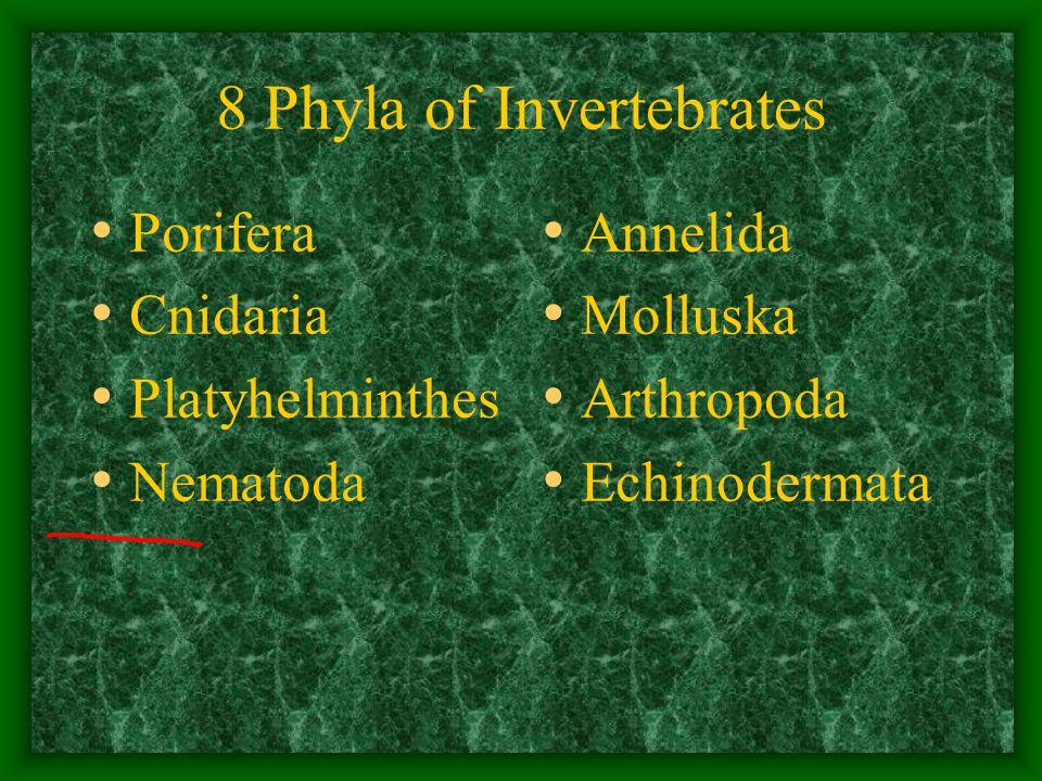 8 Phyla of Invertebrates Porifera Cnidaria Platyhelminthes Nematoda Annelida Molluska Arthropoda Echinodermata