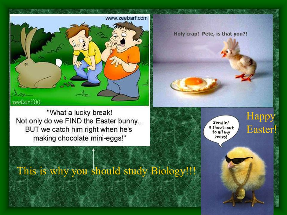 This is why you should study Biology!!! Happy Easter!