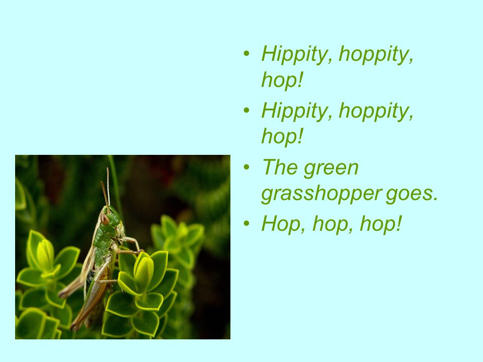 Hippity, hoppity, hop! The green grasshopper goes. Hop, hop, hop!