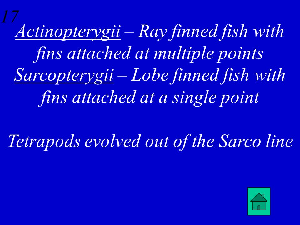 16 Describe the difference between bony fish in Subclass Actinopterygii and Sarcopterygii.