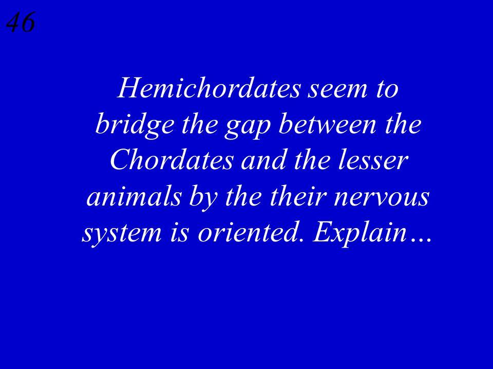 45 Lancelet Cephalochordata Acorn Worm Hemichordata Sea Squirt Urochordata