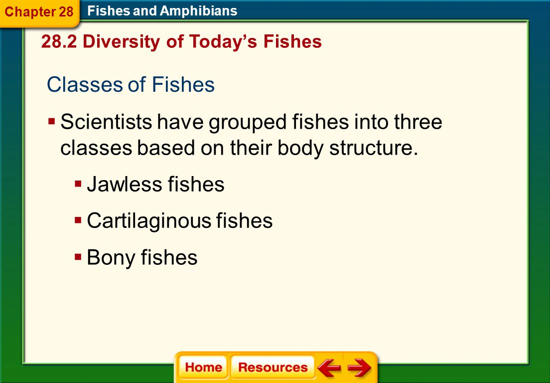 Classes of Fishes  Scientists have grouped fishes into three classes based on their body structure.