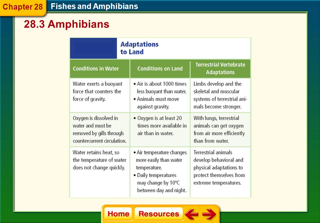 Fishes and Amphibians 28.3 Amphibians Chapter 28