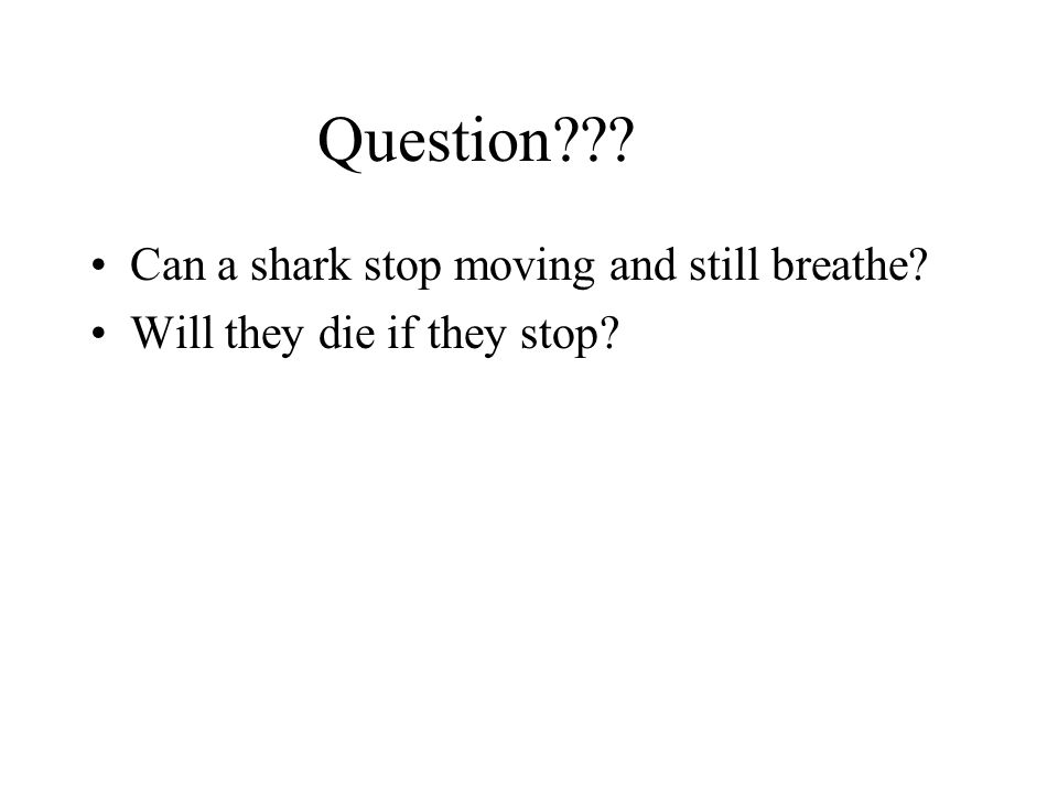 Question Can a shark stop moving and still breathe Will they die if they stop