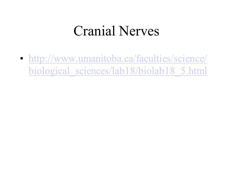 Cranial Nerves http://www.umanitoba.ca/faculties/science/ biological_sciences/lab18/biolab18_5.htmlhttp://www.umanitoba.ca/faculties/science/ biological_sciences/lab18/biolab18_5.html