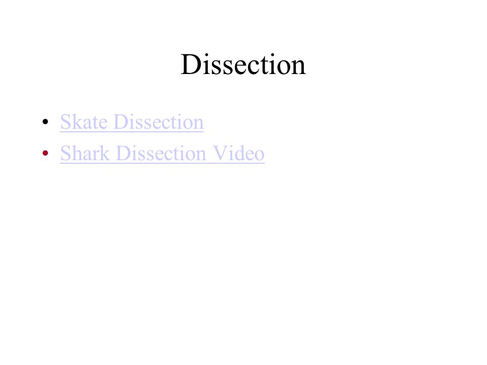 Dissection Skate Dissection Shark Dissection Video