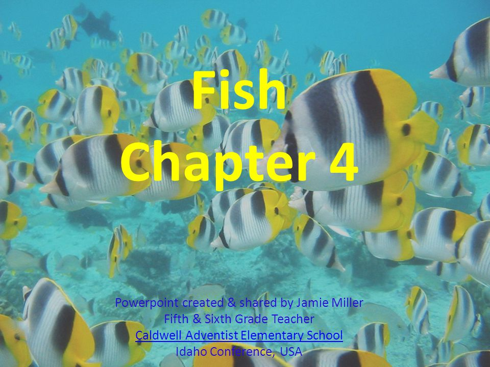 1.Which characteristic is common to both cartilaginous fish and jawless fish.
