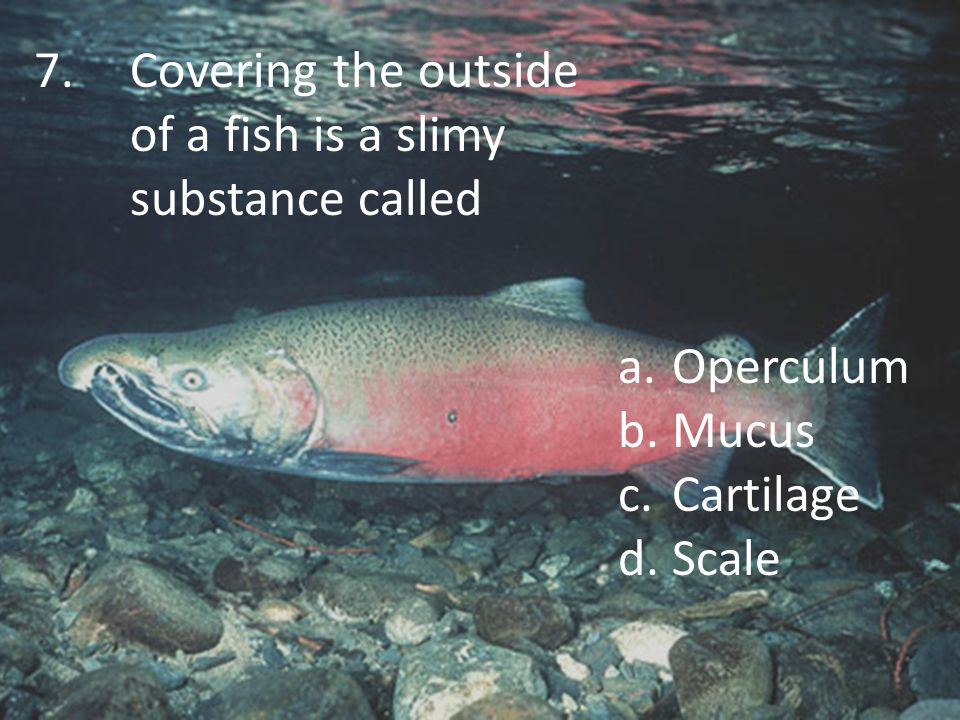 8.An organ fish have but land animals do not have is a.Heart b.Swim bladder c.Ears d.Lungs