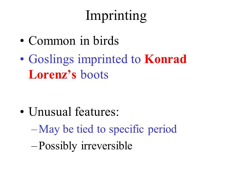 Konrad Lorenz and a Goose