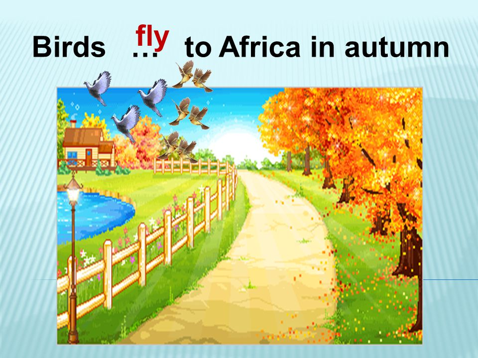 Birds … to Africa in autumn fly