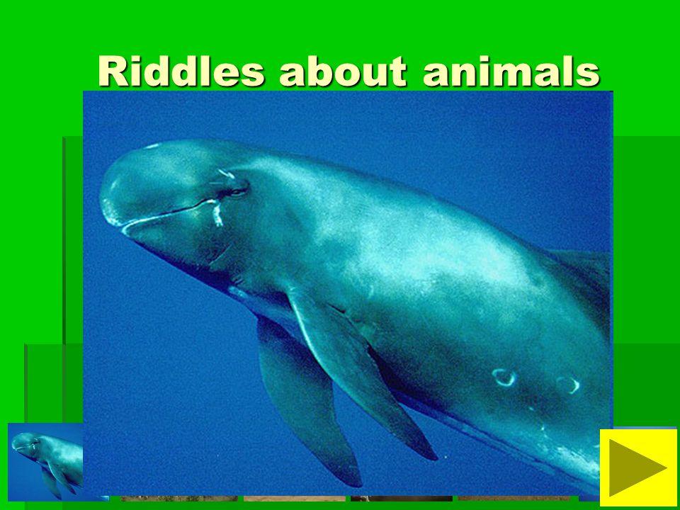 It is not a dangerous animal. It is slow and fat. It is very heavy. I am not afraid of it.