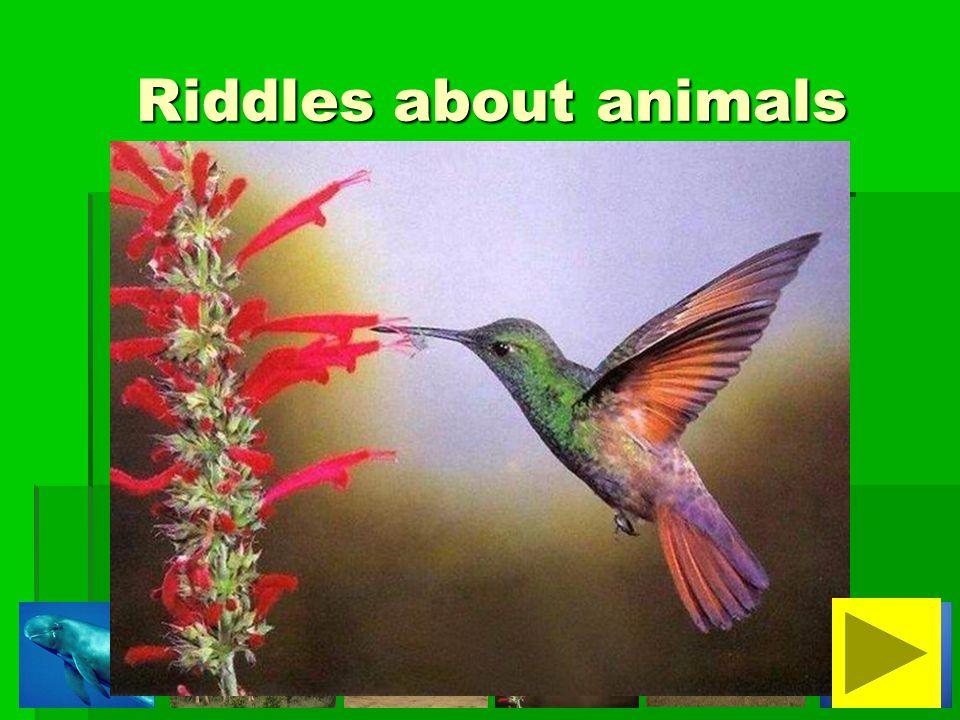 It is a small animal.It is not dangerous. It is not fluffy.