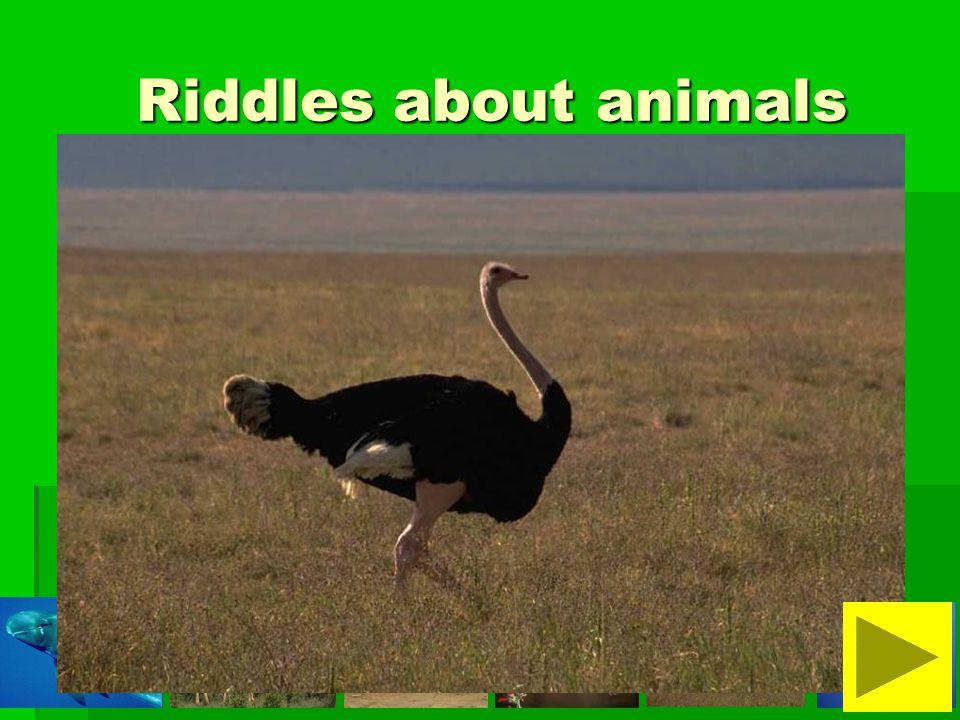 It is a small animal. It is not dangerous. It is not fluffy.