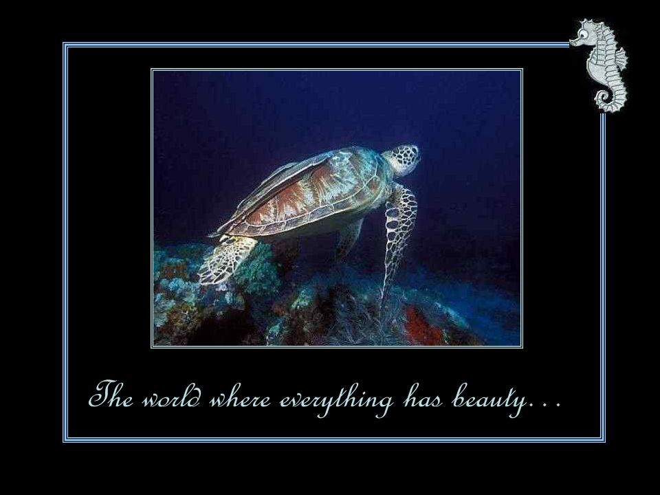 The world where everything has beauty…