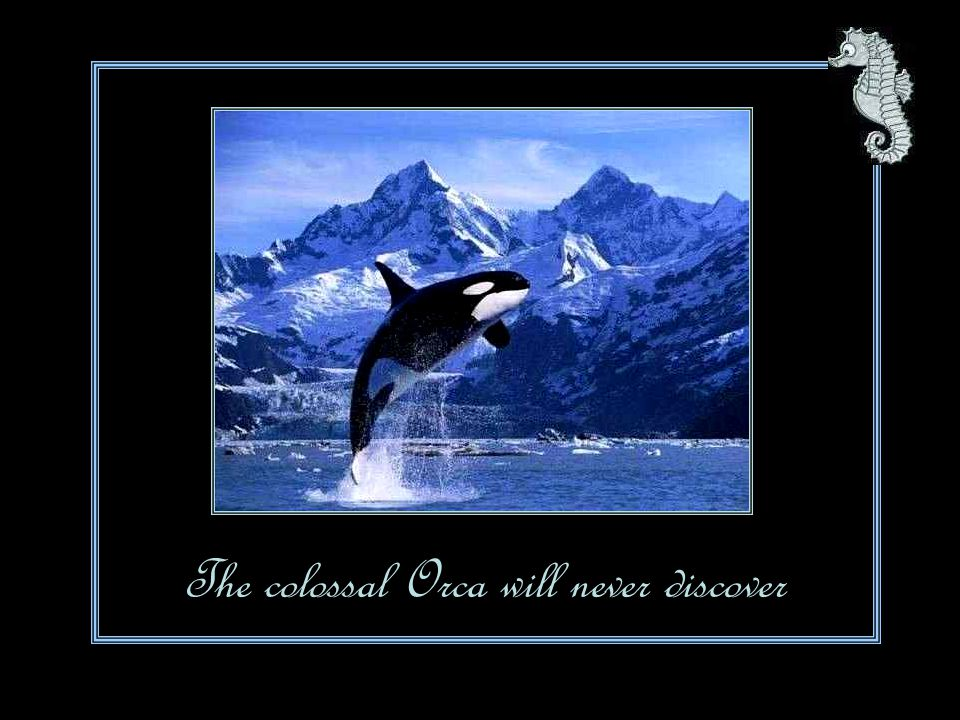 The colossal Orca will never discover