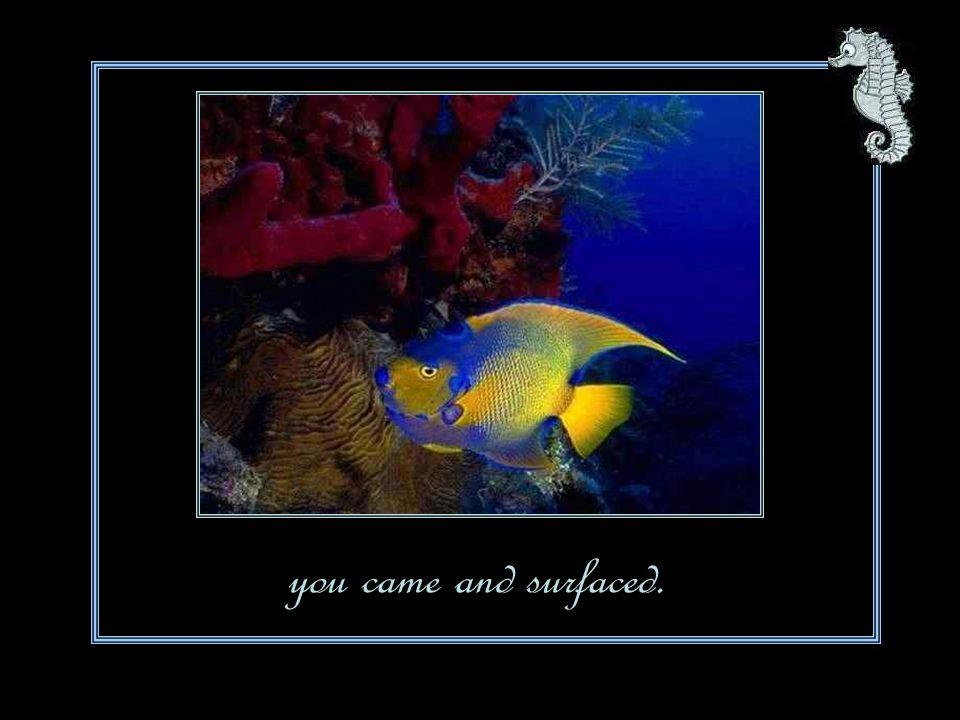Hidden lives are revealing fins waving,