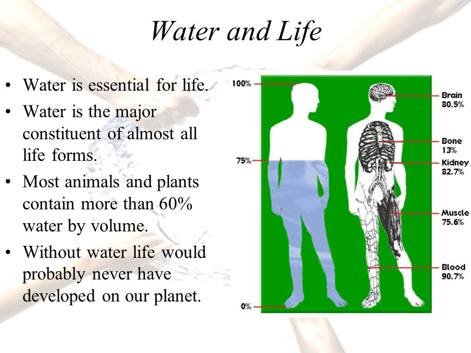 14 Water and Life Water is essential for life.