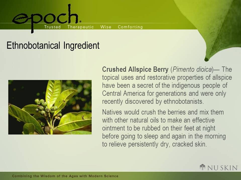 Ethnobotanical Ingredient Crushed Allspice Berry ( Pimento dioica )— The topical uses and restorative properties of allspice have been a secret of the indigenous people of Central America for generations and were only recently discovered by ethnobotanists.
