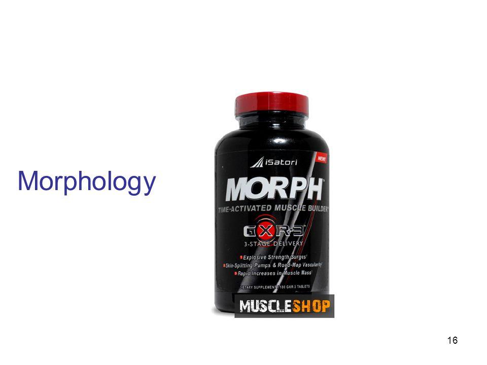 Morphology 16