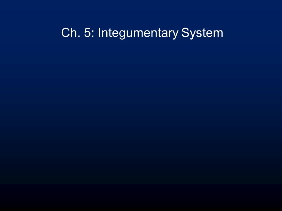 Ch. 5: Integumentary System