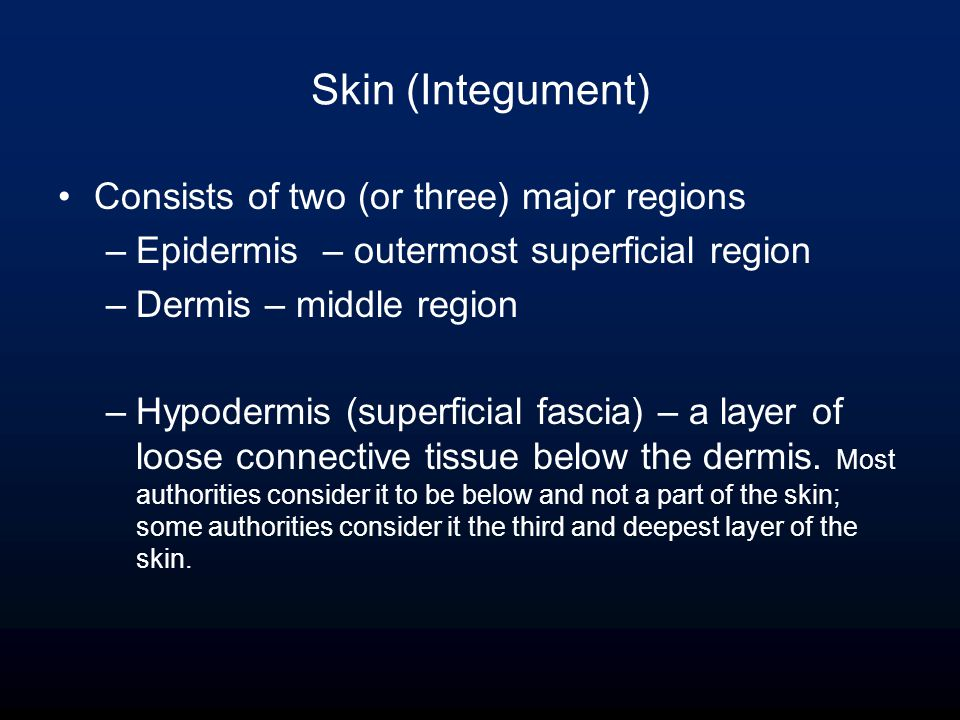 Skin (Integument) Consists of two (or three) major regions –Epidermis – outermost superficial region –Dermis – middle region –Hypodermis (superficial fascia) – a layer of loose connective tissue below the dermis.