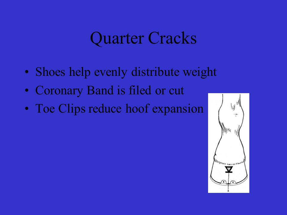 Quarter Cracks Shoes help evenly distribute weight Coronary Band is filed or cut Toe Clips reduce hoof expansion