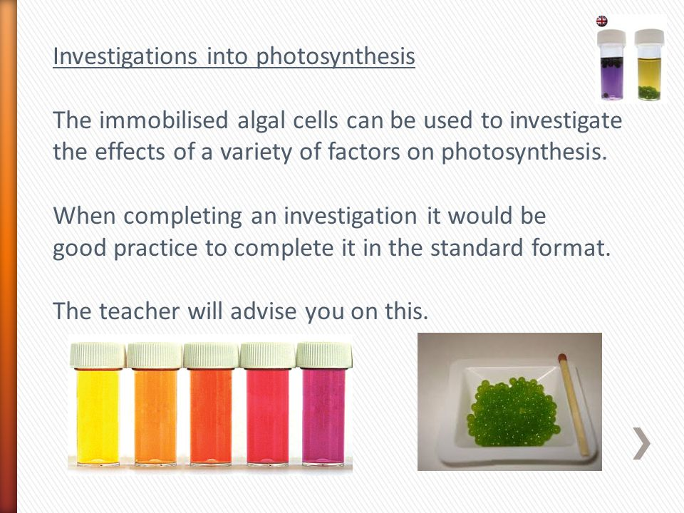 Investigations into photosynthesis The immobilised algal cells can be used to investigate the effects of a variety of factors on photosynthesis.