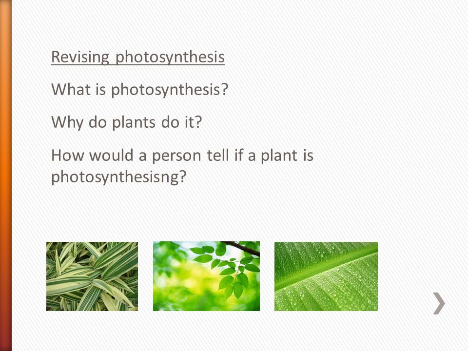 Revising photosynthesis What is photosynthesis. Why do plants do it.