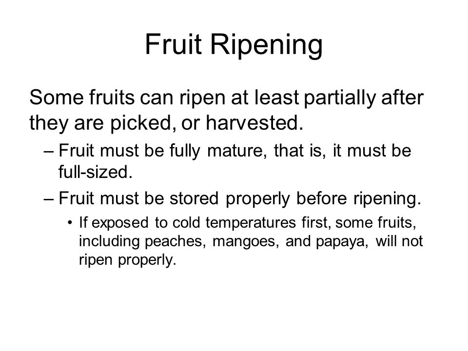 Fruit Ripening Some fruits can ripen at least partially after they are picked, or harvested. –Fruit must be fully mature, that is, it must be full-siz