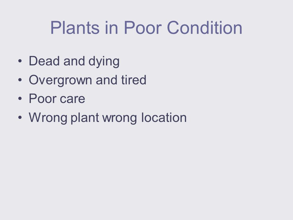 Plants in Poor Condition Dead and dying Overgrown and tired Poor care Wrong plant wrong location