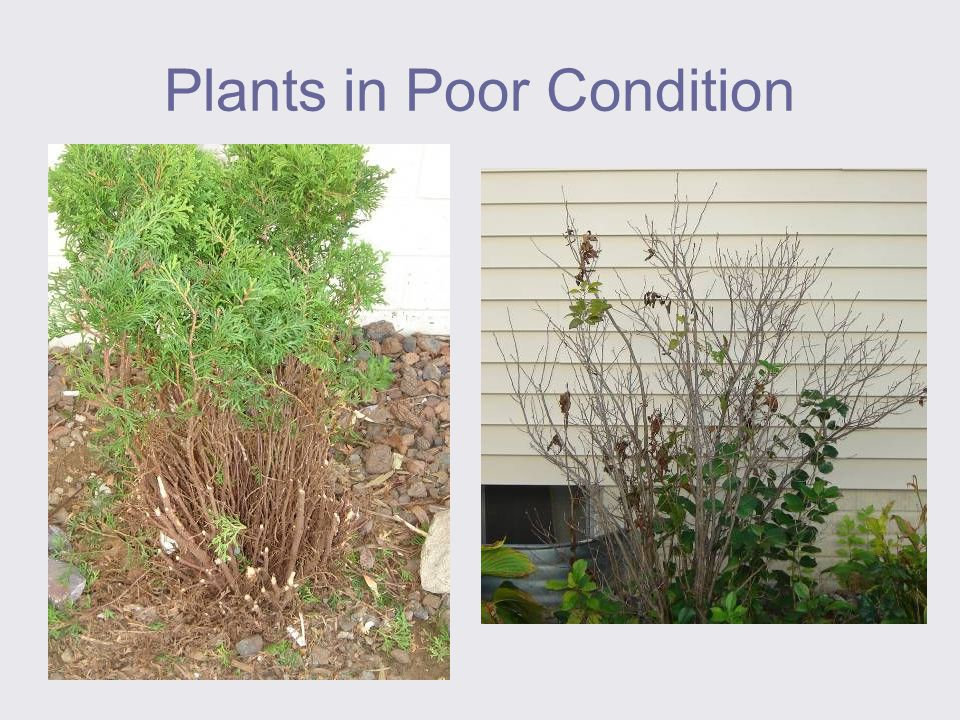 Plants in Poor Condition