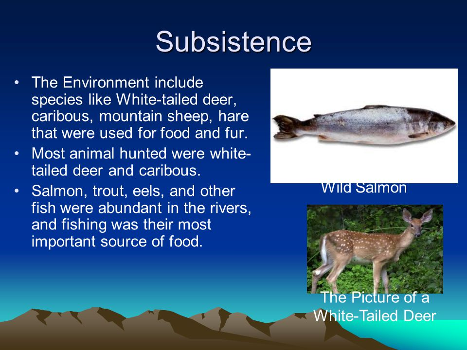 Subsistence The Environment include species like White-tailed deer, caribous, mountain sheep, hare that were used for food and fur.