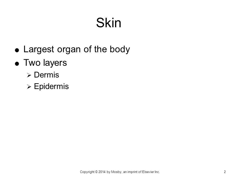  Largest organ of the body  Two layers  Dermis  Epidermis Skin Copyright © 2014 by Mosby, an imprint of Elsevier Inc.2