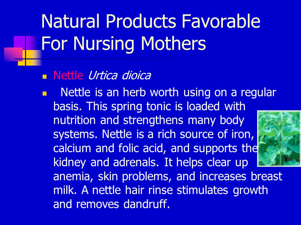 Natural Products Favorable For Nursing Mothers Nettle Urtica dioica Nettle is an herb worth using on a regular basis. This spring tonic is loaded with