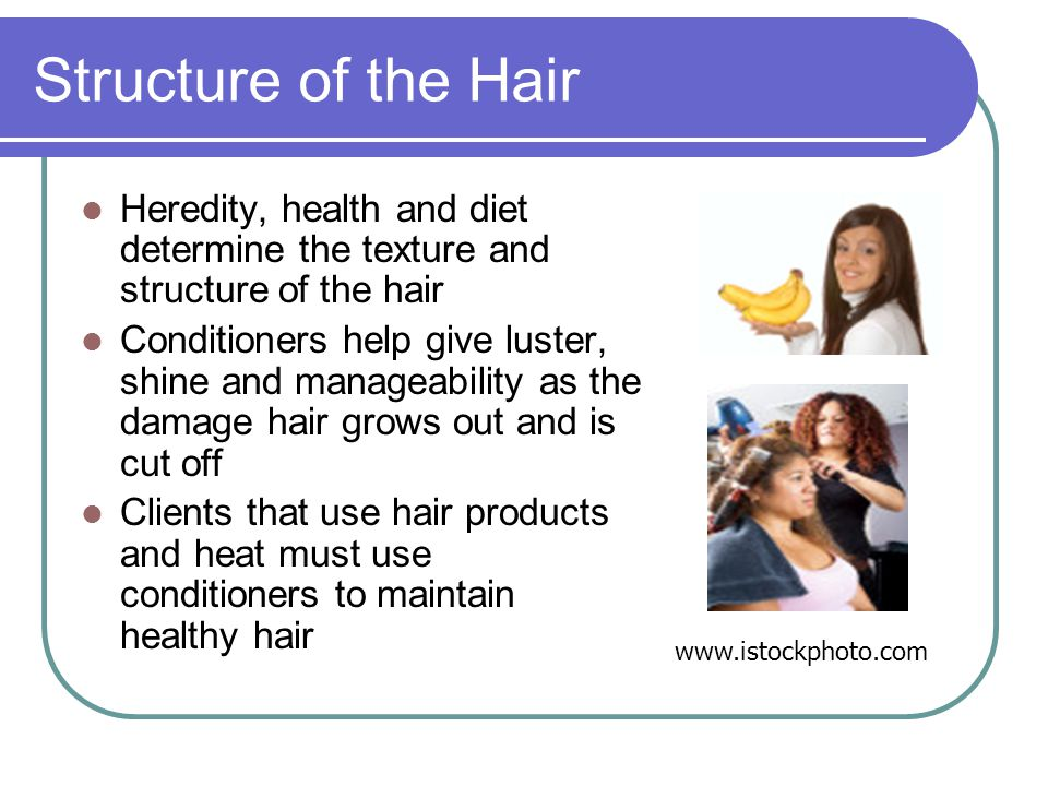 Structure of the Hair Heredity, health and diet determine the texture and structure of the hair Conditioners help give luster, shine and manageability as the damage hair grows out and is cut off Clients that use hair products and heat must use conditioners to maintain healthy hair www.istockphoto.com