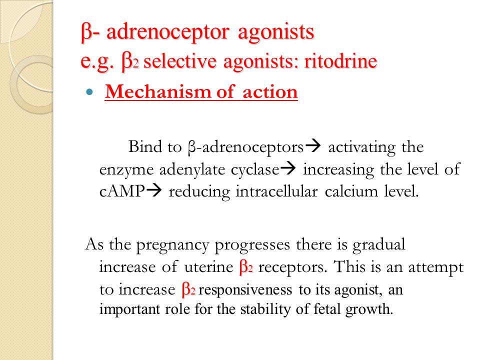 β- adrenoceptor agonists e.g. β 2 selective agonists: ritodrine Mechanism of action Bind to β-adrenoceptors  activating the enzyme adenylate cyclase