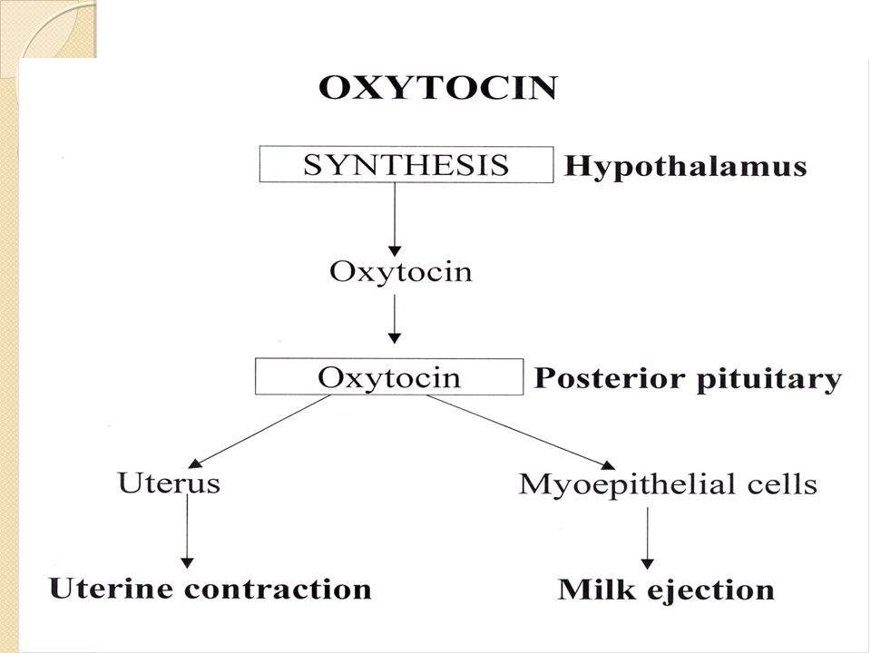 Oxytocin causes contraction of the fundus only.