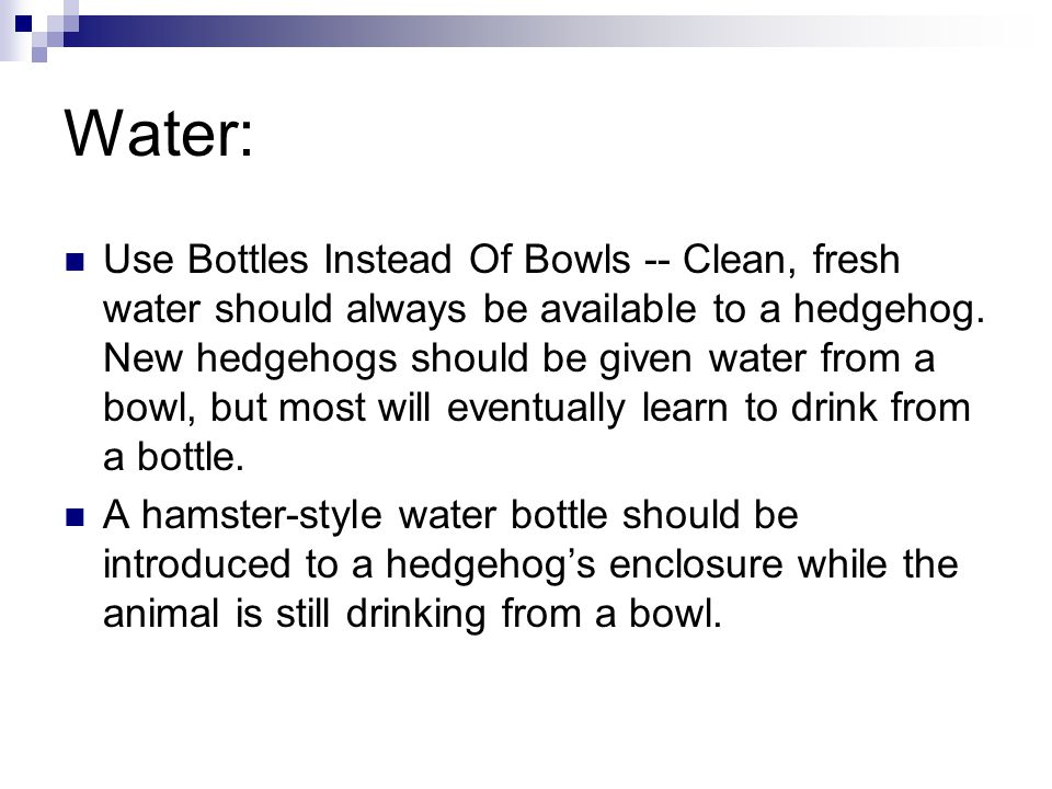 Water: Use Bottles Instead Of Bowls -- Clean, fresh water should always be available to a hedgehog. New hedgehogs should be given water from a bowl, b