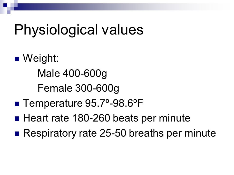 Physiological values Weight: Male 400-600g Female 300-600g Temperature 95.7º-98.6ºF Heart rate 180-260 beats per minute Respiratory rate 25-50 breaths per minute